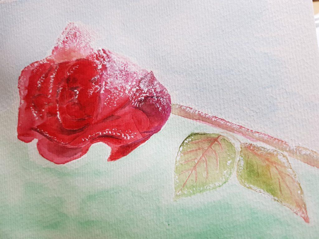 Rose mit Raureif